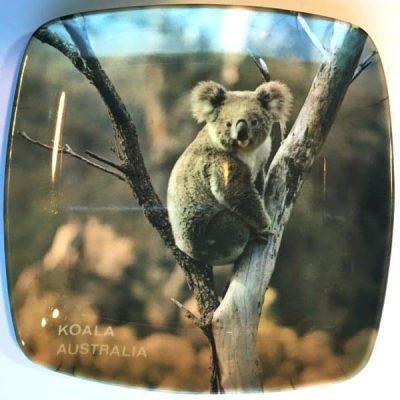Koala Australia plate
