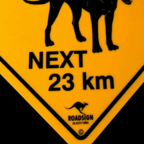 tusam-Australian Made Souvenir Roadsign Car Window Suction Swing Sign Dingoes 3_tn