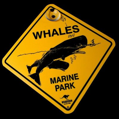 tusam-Australian Made Souvenir Roadsign Car Window Suction Swing Sign Whale 1_tn