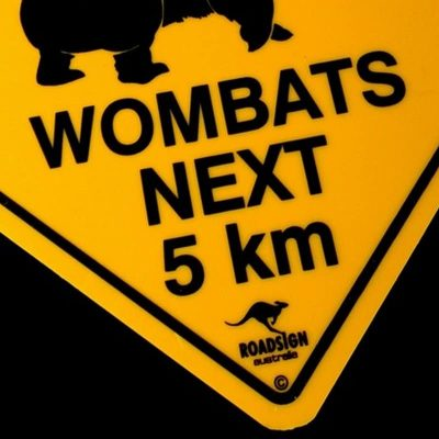 tusam-Australian Made Souvenir Roadsign Car Window Suction Swing Sign Wombat 2_tn
